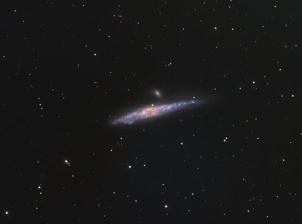 NGC 4631 Whale Galaxy,                                Bernd Steiner