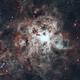 NGC 2070 Tarantula Nebula,                                Carlos Taylor