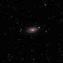 NGC 5055 - The Sunflower Galaxy,                                Randy Roy