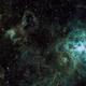 NGC2070 (Tarantual) including Seahorse Nedula,                                Damien Finlayson