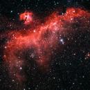 Seagull Nebula IC 2177,                                Scott Homstead