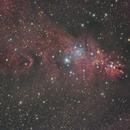NGC 2264,                                Detlef Möller