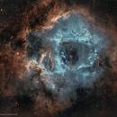 NGC 2239 Rosette Nebula 4-Panel Mosaic,                                Carlos Taylor