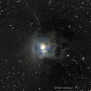 NGC 7023 -- NEBULOSA IRIS,                                Omar Carlino