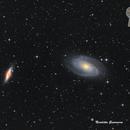 M81 M82,                                Nicoletta Guarniera