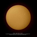 The Sun in Ha,                                Dominique Callant