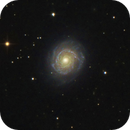 NGC 3147,                                Gotthard Stuhm