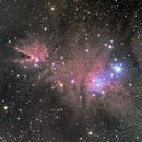 Christmas tree cluster and Cone Nebula,                                Rodolphe Goldsztejn