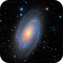 M 81,                                Mike Miller