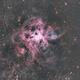 Tarantula Nebula,                                Neil Johnston