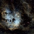 IC 410, the Tadpoles Nebula, SHO,                                Stephen Garretson