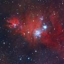 NGC 2264 (Christmas Tree & Cone Nebula),                                Michael Southam