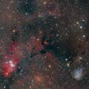 Cone Fox and IC447 nebula,                                Michele Trungadi