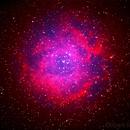 C49 Rosette Nebula (One Shot Bi-Color),                                Gilbert Ikezaki