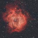 Rosette Nebula,                                Tony Kriz