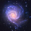 Pinwheel Galaxy, M101,                                Firas Haki