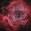 Rosette Nebula - 100 Hour High Resolution Mosaic,                                Mike Wiles