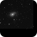 NGC 772 - Arp 78,                                Michael Lorenz