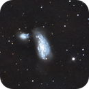 """NGC 4490 """"The Cocoon Galaxy."""" In Canes Venatici. LRGB,                                Pat Rodgers"""