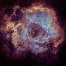 NGC 2237  Rosetten-Nebel,                                Michael Schmid