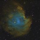 Monkey Head Nebula,                                yock1960