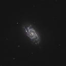 NGC 1084,                                Gary Imm