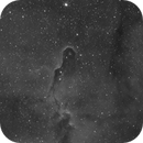 Elephant Trunk Nebula IC1396,                                Jay Michael