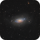 Messier 63 (the Sunflower Galaxy ) in Canes Venatici,                                Steve Milne
