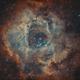 Caldwell 49 - Rosette Nebula [Bicolor],                                jdifool