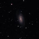 NGC 2903,                                Markus Adamaszek