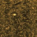 Sun - Halpha inv. - AR2394,                                Stephan Reinhold