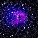 IC410  Tadpole Nebula,                                JerryB Horseheads NY