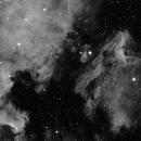 IC5070+NGC7000,                                Fabio Semeraro