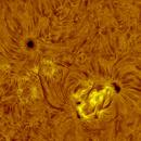 AR 2818-2820 h-alpha 2021-04-24,                                Nicolas Escurat