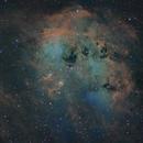 The Tadpoles in SHO/RGB,                                rflinn68