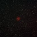 Cocoon Nebula,                                John Willis