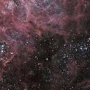 Star Clusters @Tarantula Nebula (NGC 2060, NGC2044 and NGC2042),                                Ruben Barbosa