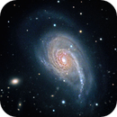NGC-772 - Don't Pull My Tail,                                Steve Solon and Terry Chatterton