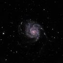 NGC 5457 (Messier 101),                                Randy Roy