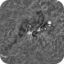 AR2205 in Ha - inverted,                                Brian Ritchie