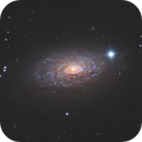 Sunflower Galaxy,                                Damien Cannane