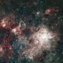 NGC 2070 - Tarantula Nebula,                                Luis Calle Rosasco