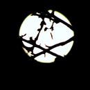 """La """"Lune de la Neige"""", pleine lune de février 2016,                                Pouget"""