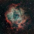 The Rosette Nebula - NGC2244,                                Mike Markiw
