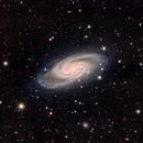 NGC 2903,                                Andrew Barton
