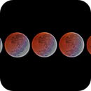 Lunar Eclipse 4/4/2015 from 4:30-5:10 PDT,                                Tom Masterson
