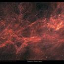 Filaments of Cygnus,                                Metsavainio