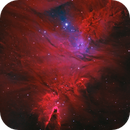 The little pink tree(NGC2264),                                Wei Li