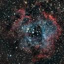 Rosette Nebula,                                Randy Flynn