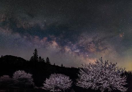 Spring night with cherry trees - 1,                    Toshiya Arai